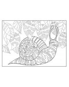 Snail Colouring Page