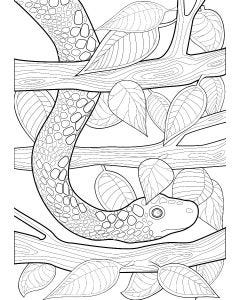 Snake and Leaves Colouring Page